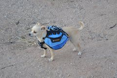 Rock Climbing Photo: Aint nothin like a chihuahua with a backpack. Some...