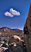 Rock Climbing Photo: Bearded Cabbage