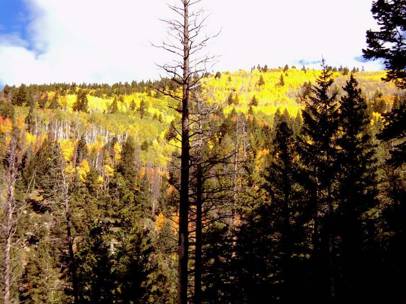 Rock Climbing Photo: Fall colors in the Mill Creek drainage.
