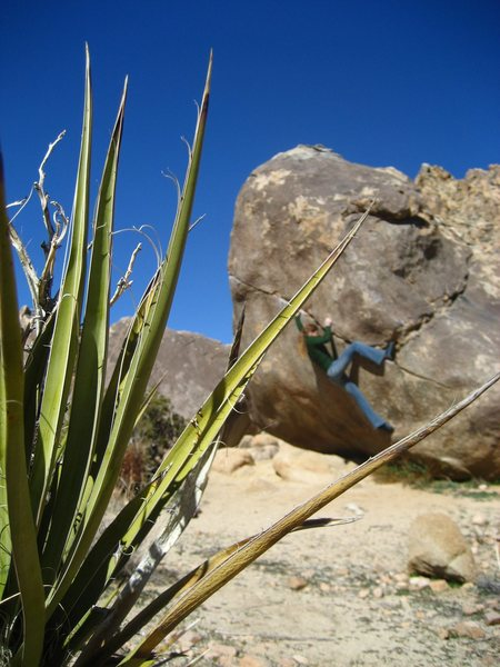 alexis bouldering at the chocolate boulders.  V4.
