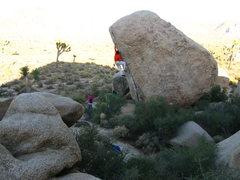 Rock Climbing Photo: the big move on white rastafarian V3R.