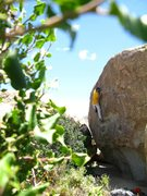 Rock Climbing Photo: this is a V3R out in the planet x area.  a nice pr...
