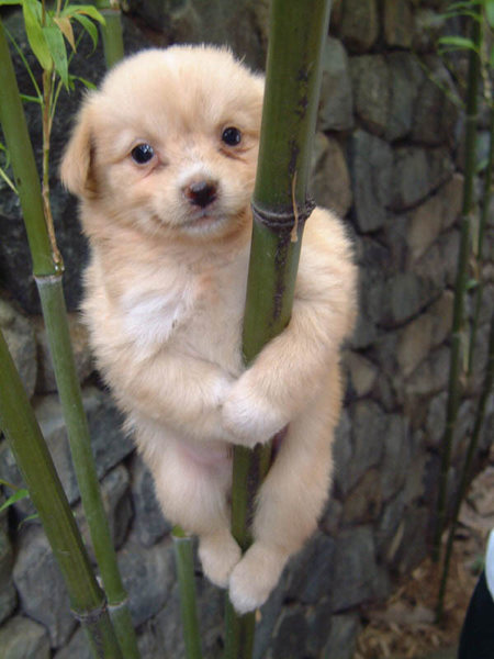 this is how i like to climb: hang on tight and smile