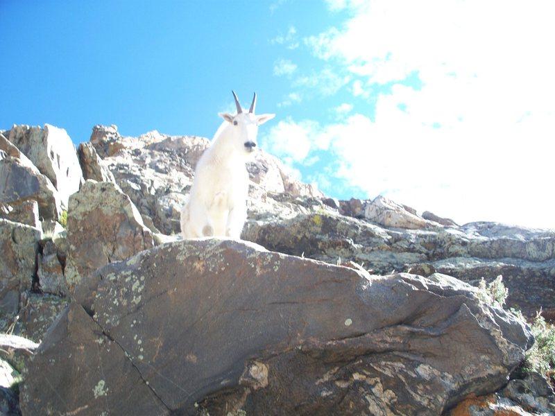 Rock Climbing Photo: The Second Reincarnation of the Golden Goat.