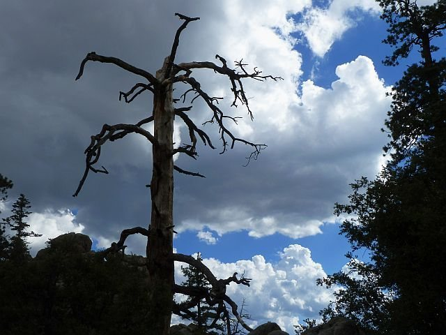 Weathered snag and clouds, Holcomb Valley Pinnacles