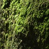 some of the unclimbed rock can get a little mossy