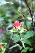 Rock Climbing Photo: Paintbrush (castille ja spp.)  Plain of Six Glacie...