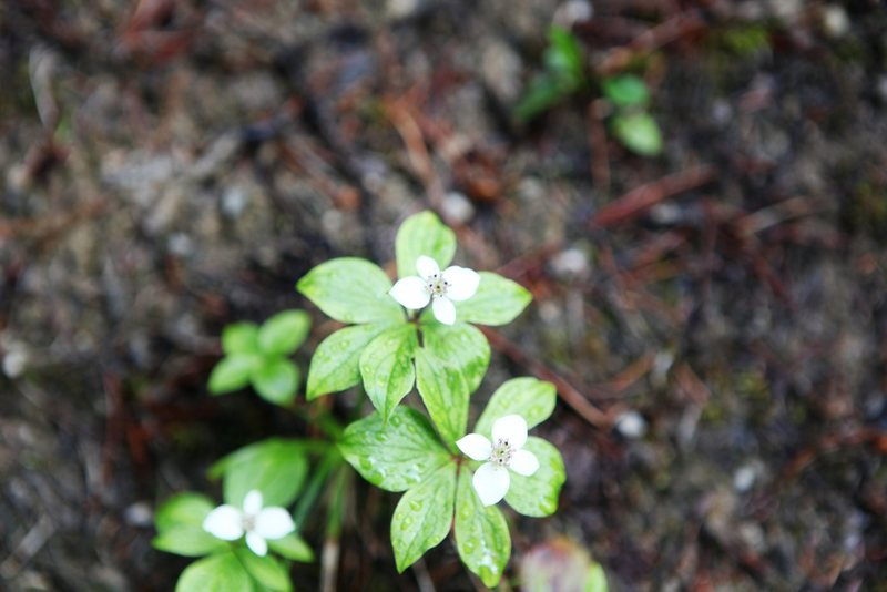Rock Climbing Photo:   Johnston Canyon, Banff National Park