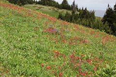 Rock Climbing Photo: Mountain Meadows  Kamloops Region, British Columbi...