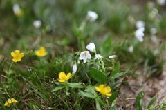 Rock Climbing Photo:   Kamloops Region, British Columbia