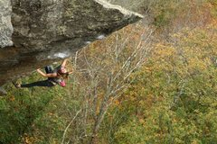 Rock Climbing Photo: lily dynoing above the trees