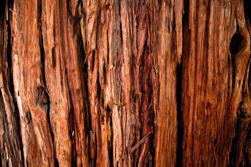 Columbia Boulder Tree.