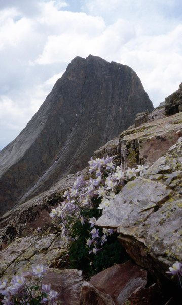 Rock Climbing Photo: The CO State Columbine with Vestal behind.  Taken ...
