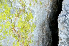 Rock Climbing Photo: It's green.
