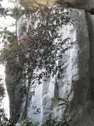 Rock Climbing Photo: Nepenthes Wall overview.