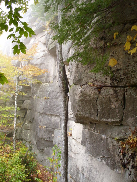 Rock Climbing Photo: The route is right of the tree. It follows the cra...