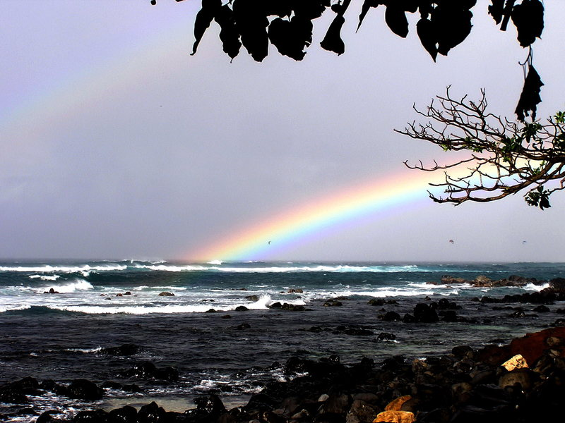 North Shore rainbow<br> Photo: Olaf Mitchell