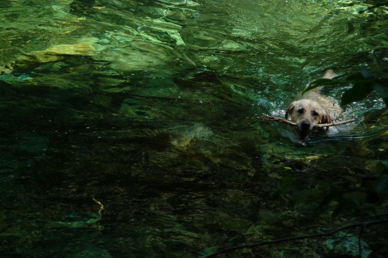 Indie in Opal Creek