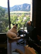 Fiona would rather be running around the mountains, but the view and deskspot will do for now.