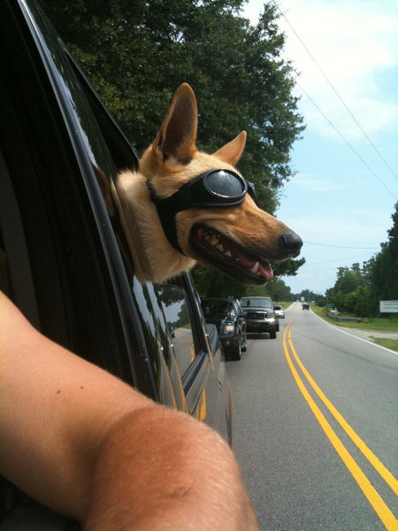 Rock Climbing Photo: My crag dog wears them when she wants to put her h...