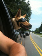 My crag dog wears them when she wants to put her head out the window.