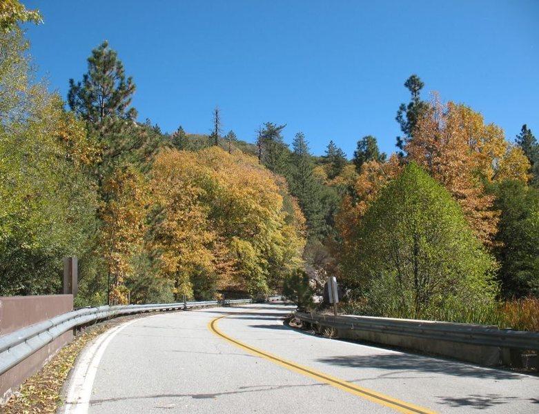 Fall colors along Hwy 243, San Jacinto Mountains