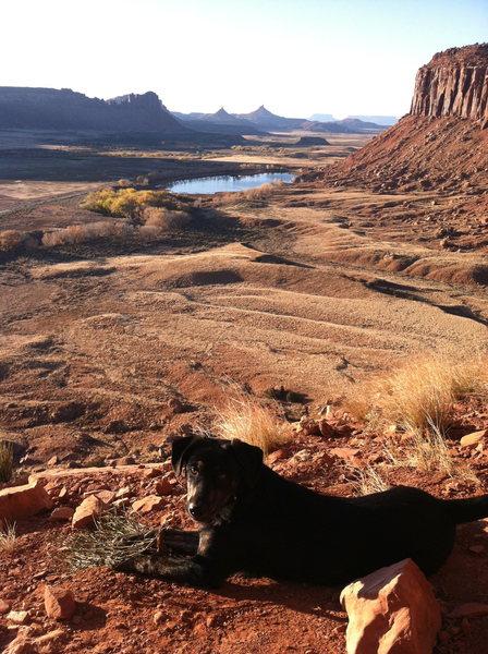 Rocky the crag-dog in I.C. Utah
