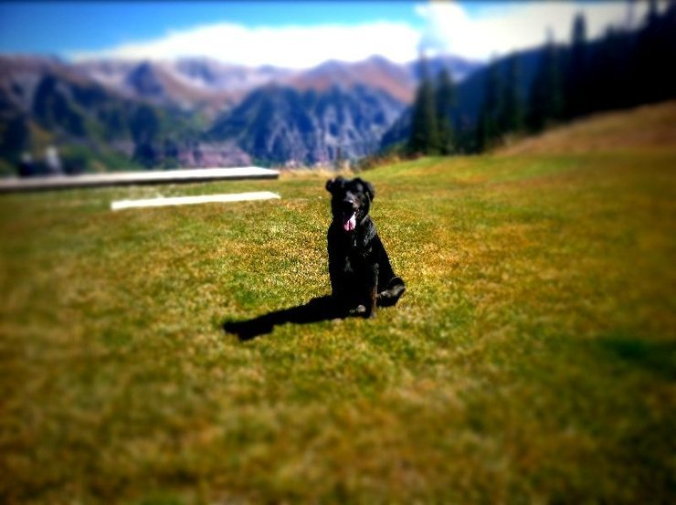 Rocky the mountain dog at home in Telluride.<br> He's a 9 month old retriever/heeler mix.