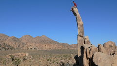 Rock Climbing Photo: Aiguille de Joshua Tree.  photo Logan