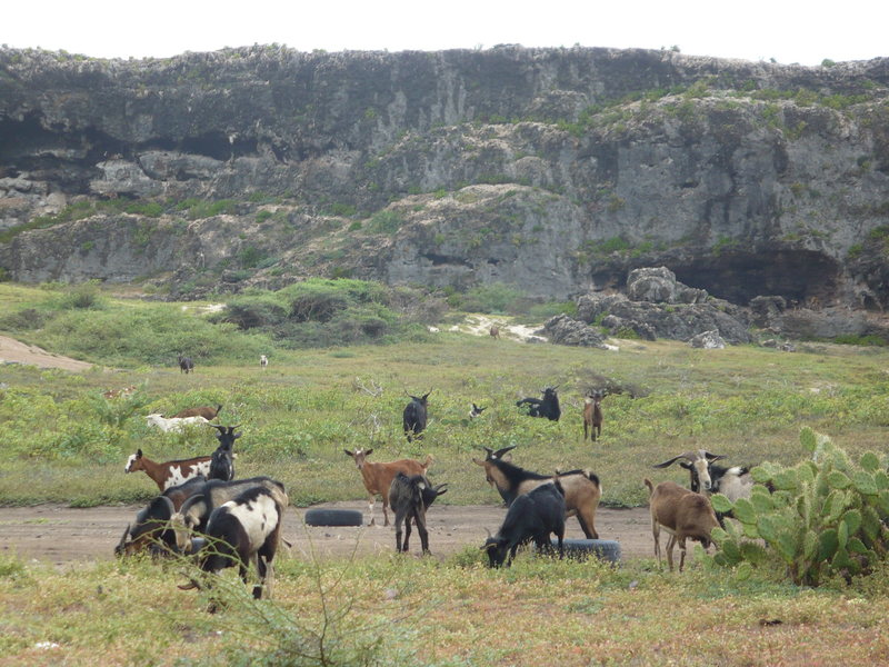 """""""goat""""field.  Goats are very prevalent in the area"""
