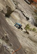 Rock Climbing Photo: The start of P2, exiting the stance below the tree...