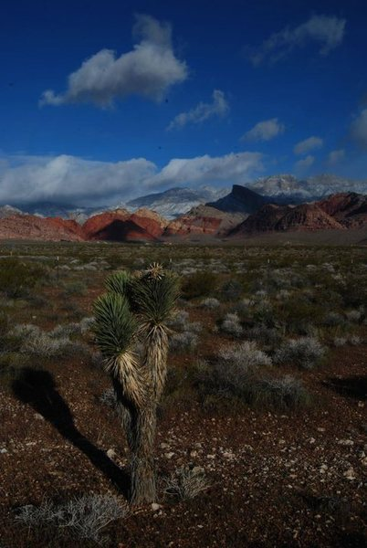 Rock Climbing Photo: calico hills