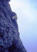 Rock Climbing Photo: Low on Scarf Arete, 1963. Giacomo Scalet leading.