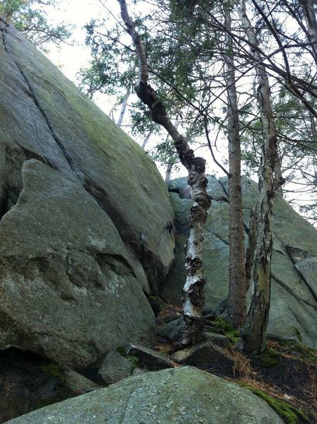 """Rock Climbing Photo: """"Happy Feet"""" ascends the face to the rig..."""
