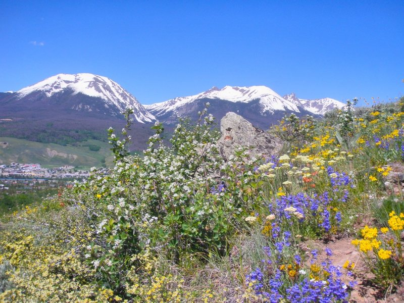 Buffalo Mountain with flowers.