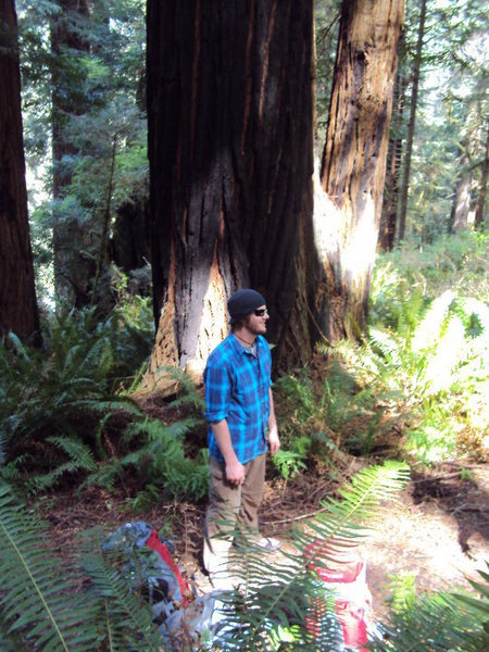Hiking through the Redwood forest of NorCal