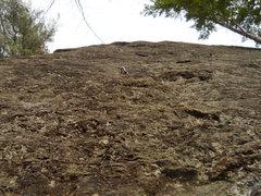 Rock Climbing Photo: looking up at Old Stud