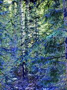 Rock Climbing Photo: Jenny Lind Trees