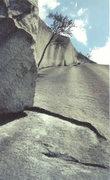 Rock Climbing Photo: Stone Mountain 5.6; sling the trees