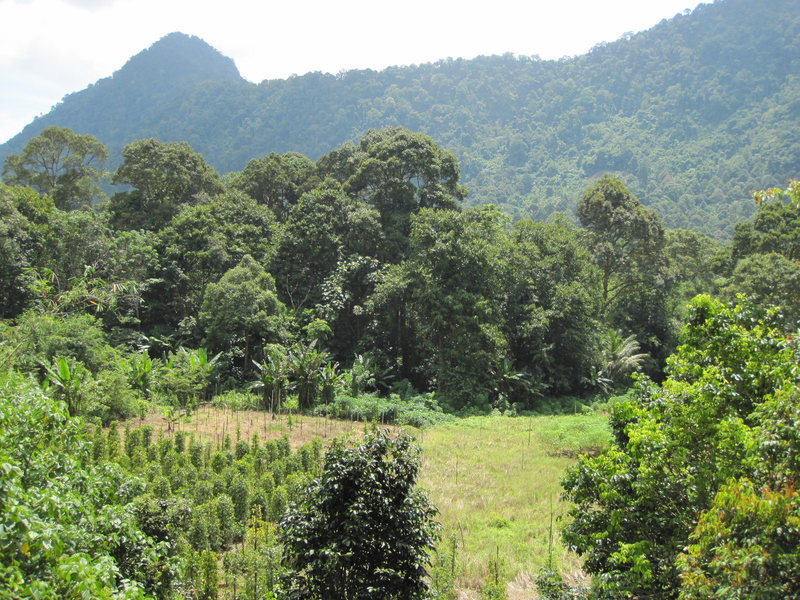 The lovely area of Gunung Buros and pepper fields you have to negociate to get to the wall.
