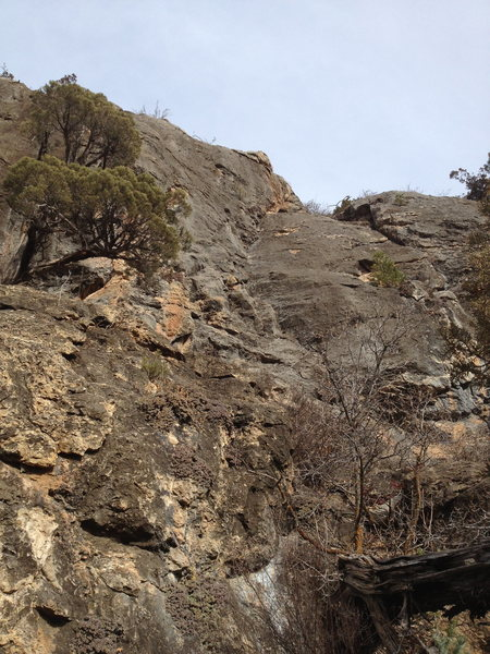 Opportunity Cost climbs the steep grey face just right of the tree and left of the crack feature seen in this photo.