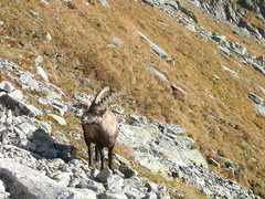 Rock Climbing Photo: Hooved company at the base of the Pfriendler climb...