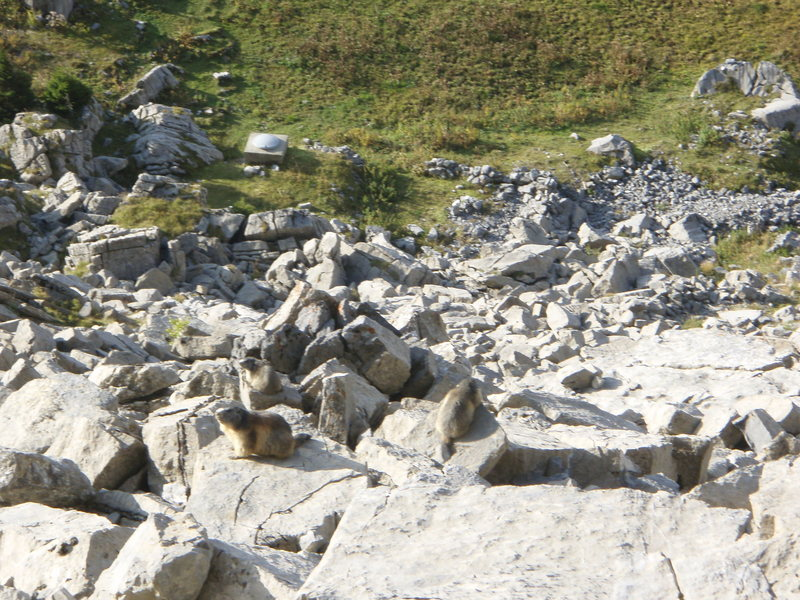 Rock Climbing Photo: Marmots in their environment