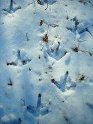 Rock Climbing Photo: Turkey tracks in the snow.  X-mas weekend 2011 on ...
