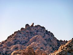 Rock Climbing Photo: The Ivory Tower from Indian Cove, Joshua Tree NP