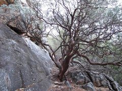 Rock Climbing Photo: December 2011, the base of the Lower Lunchbox, jus...