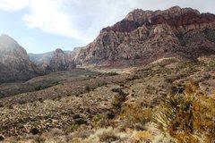 Rock Climbing Photo: Joshua Trees and Deep Canyons at Red Rocks