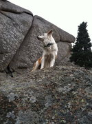 Rock Climbing Photo: Hanging with the pooch.