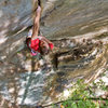 """Placing the last piece of gear, a .4 camalot, from a hold that we called the """"bloody ringlock.""""  It's actually the last decent shake out spot before the wall kicks to nearly 45 degrees on rattly fingers.  Fall, 09, photo by Tristan Croll."""