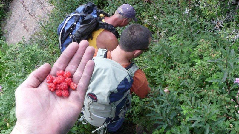 Wild raspberries in Devil's Head